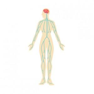 全身の神経のネットワークを表すイラスト