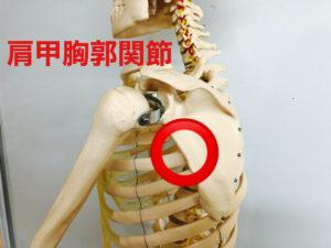 肩甲胸郭関節の画像