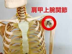 肩甲上腕関節の画像