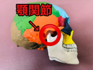 頭蓋骨の顎関節