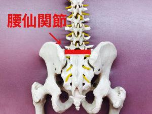 腰仙関節の画像