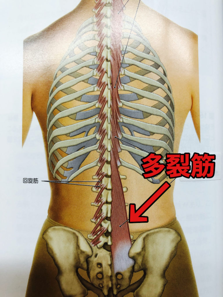 身体の内部