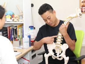 骨模型をもって説明